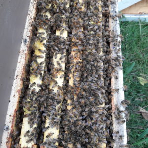 Nucs and Queens